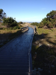 This was a lovely boardwalk to the beach