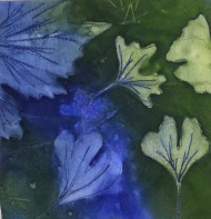 Blue and green ginkgo leaves