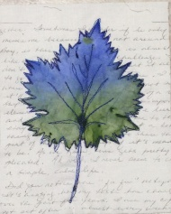 Blue grape leaf with script background